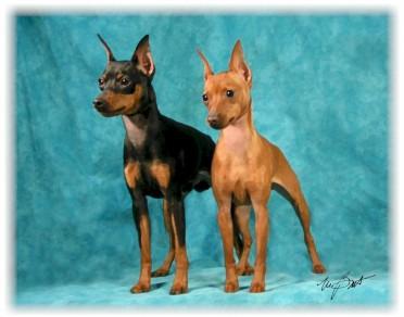 Frankie & Lili