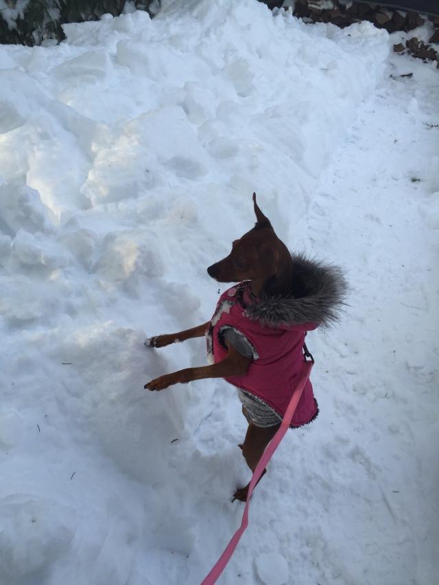 bella-snow3